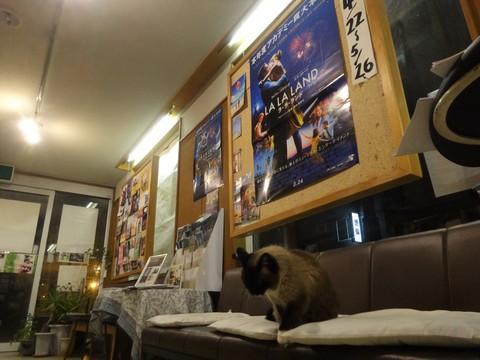 20170423 大黒座チャレンジFBページ投稿写真�A(『ラ・ラ・ランド』上映開始).JPG